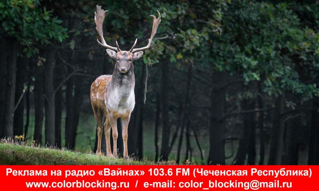 Реклама на радио Вайнах фото